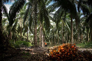 REDD /How did the world lose tropical forests the size of Bangladesh in2017?  Eco-Business