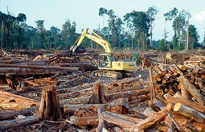 Vaporised carbon /2017 Was the Second-Worst Year on Record for Tropical Tree Cover Loss WRI