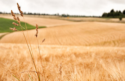 Crops failing/Europe's Blistering Heatwave Is Ruining This Year's Harvest  Bloomberg