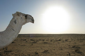 Middle-east heat risesfaster /  Climate change is making the Arab world more miserable  The Economist