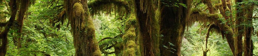 nature-1367681_1920.jpg