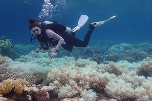 Drowning coral /Coral reefs 'will be overwhelmed by rising oceans'  The Guardian