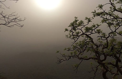 Sudden heat, sudden dust/Climate change could be intensifying dust storms in India, experts say Mongabay