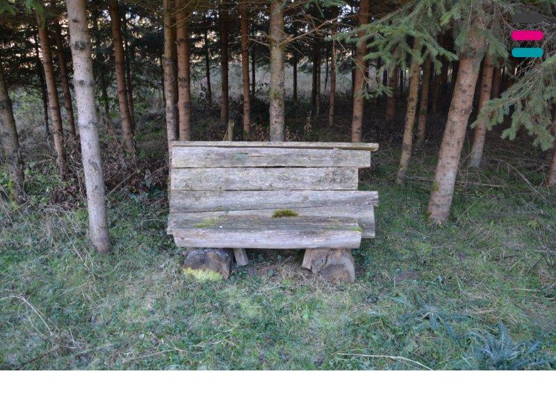 Ruheinsel im eigenen Wald