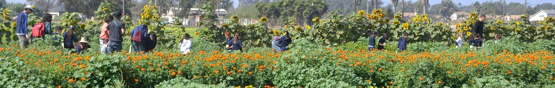 families outdoors in field of flowers, california