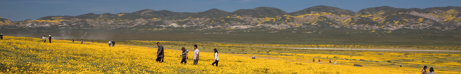 Super Bloom, Southern California