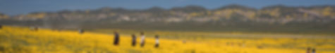 Super Bloom, Southern California
