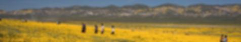 Super Bloom Carrizo Plain National Monum
