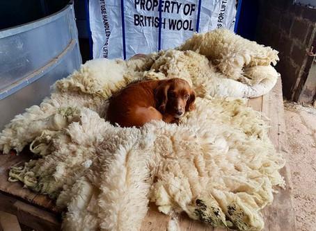 Unbeatable wool