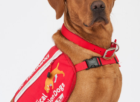 Can dogs detect COVID-19?