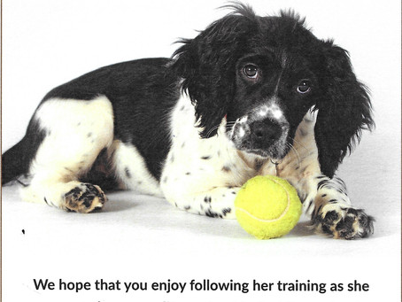 Dotty - Trainee Medical Detection Dog