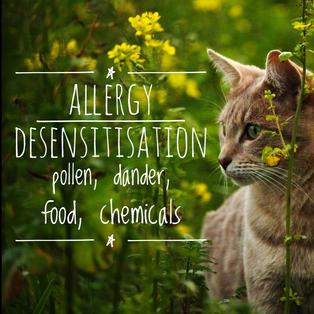 Allergies & Sensitivities