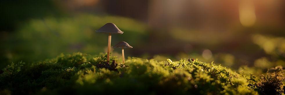 fungi-macro-moss-1118865.jpg