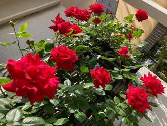 素敵なお庭紹介2021~80種の花と緑~