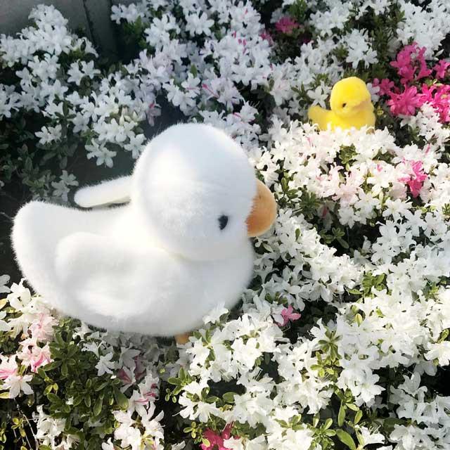 社屋のツツジ ~2019春~
