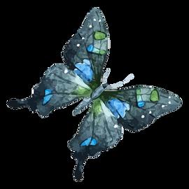 Acquerello Farfalla 15
