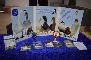 Photo from the 2017 Welsh Federation Show supplied by Richard Morris of Richmor Photography