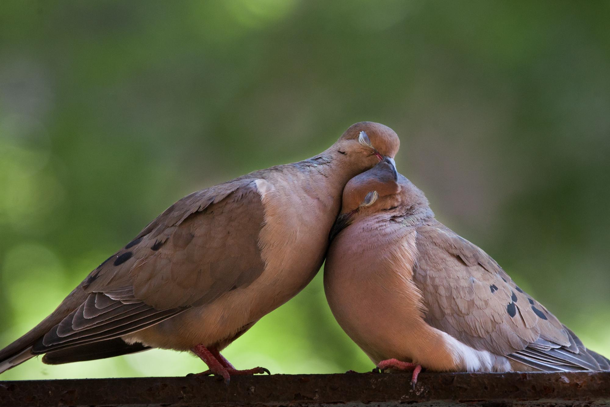 Ms & Mr Doves