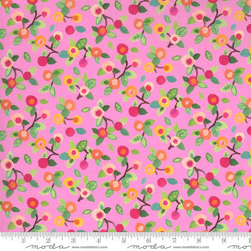 Flower Blossoms Petal
