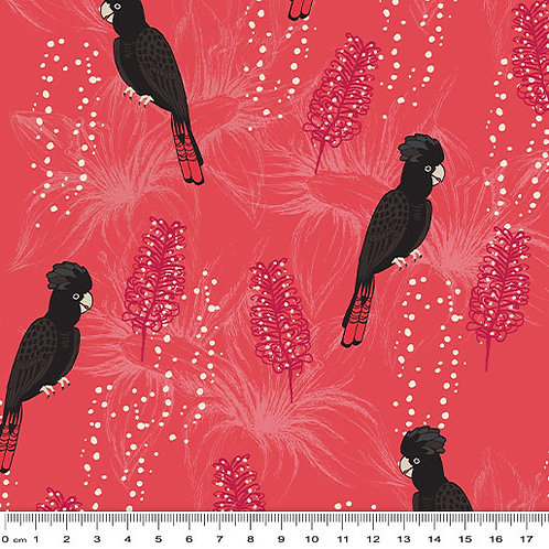 Outback Beauty - Black Cockatoo Red $30 pm