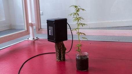 Conversation avec ma plante