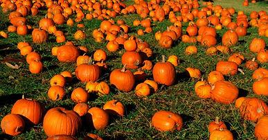 pumpkinpatch8.jpg