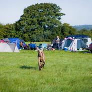 Camping and Dog.jpg