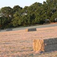 Cropped Fields