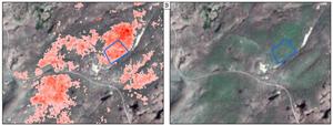Wild leek predictions (left), based on satellite imagery (right).