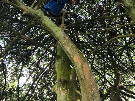 Met welk innerlijk familielid haal jij je kind uit de boom?