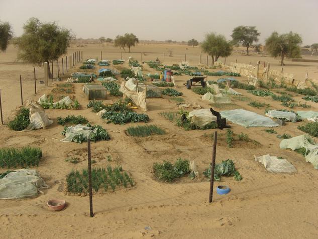 Diawambé: le jardin des femmes, février 2008
