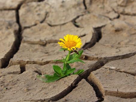 Welche Kraft steckt in unserer Natur?