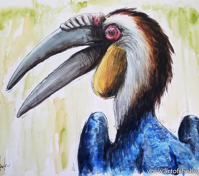 Hornbill Sketch in ink & watercolor