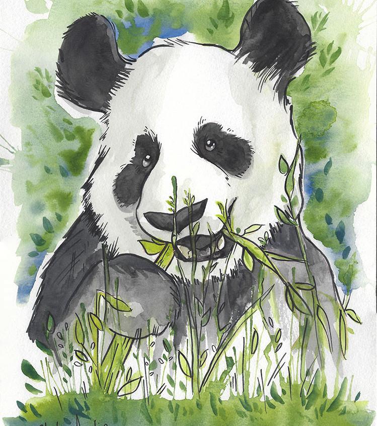 Panda Watercolor