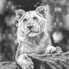 LionessMag.jpg