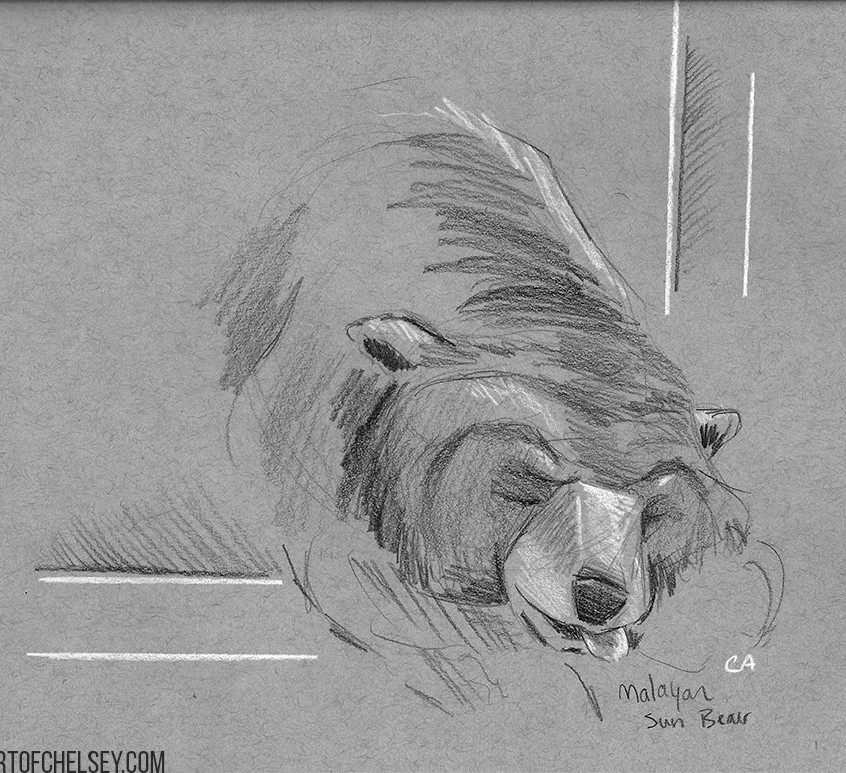 Sun Bear Grey Sketch