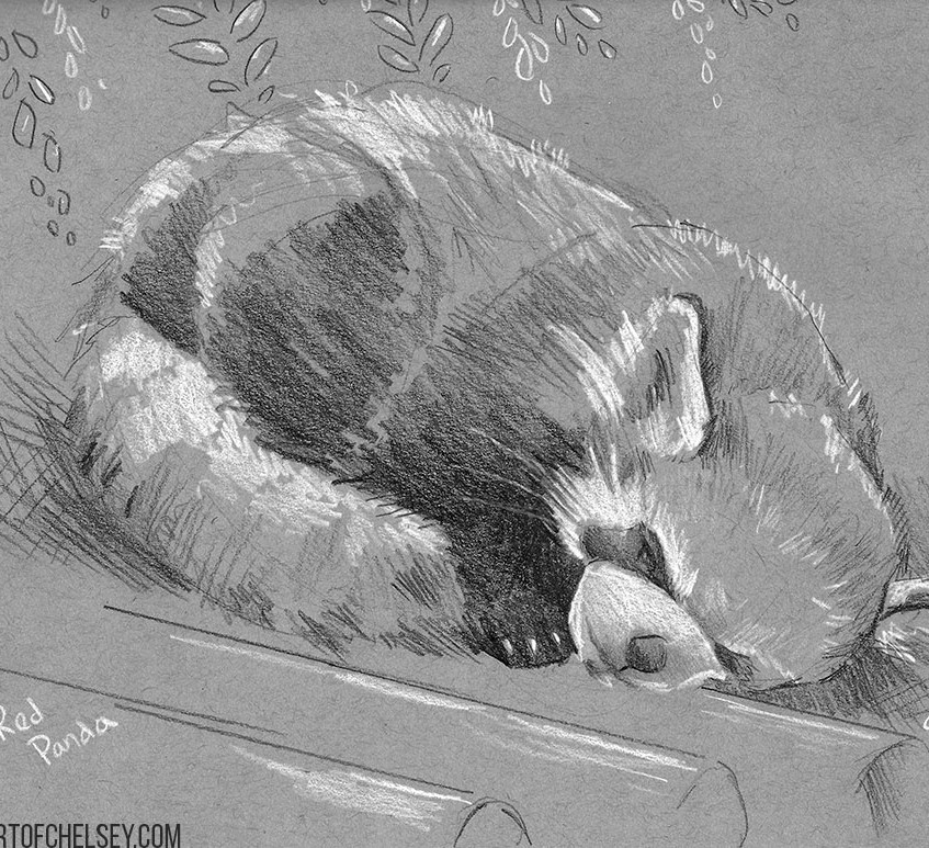 Red Panda Grey Sketch