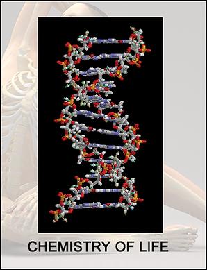 tile-biochem copy.png