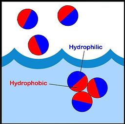 hydrophobic-bond.png