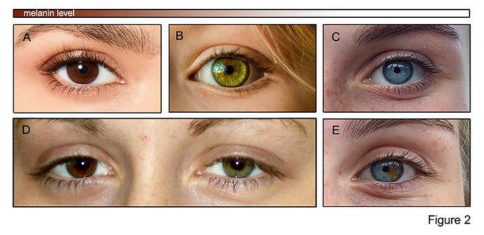 SF-eye-color 2.jpg