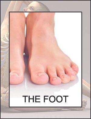 SF-foot.jpg