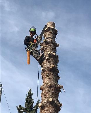 Gallery Removal spruce tree removal spar