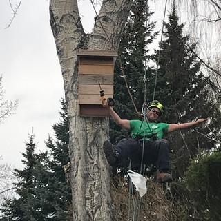 Joel installing a bat box