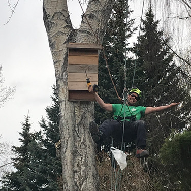 Joel installing a bat box