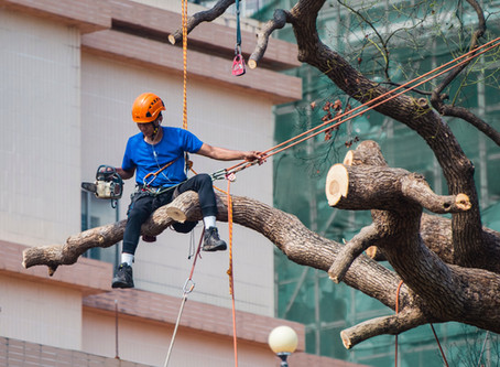 4 Reasons to Hire an Arborist