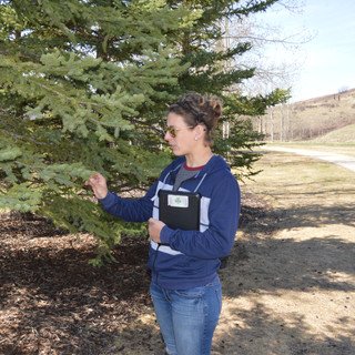 Tree Health Consultation with Amy