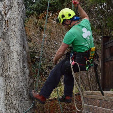 Gallery tree climbing rope access prunin
