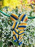 LAU PUNTU StripesYellowBlue-3 baja.jpg