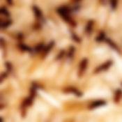 swarming_termites.jpg