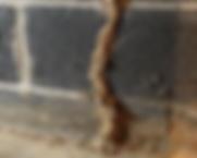 termite inspection south jersey.webp